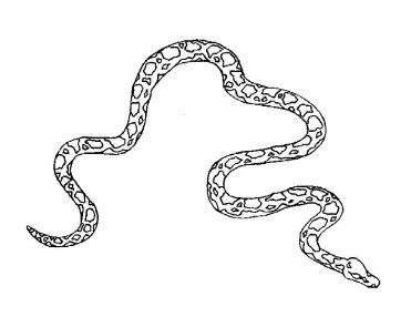 Snake 1
